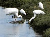 New Website Highlights Potential Restoration Alternatives at Ballona Wetlands Ecological Reserve
