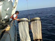 The bongo net (shown here) has been the standard CalCOFI sampler since 1978. Ships retrieve the nets at an oblique angle to collect fish larvae. CalCOFI sampling and equipment specifications must meet and follow rigorous standards